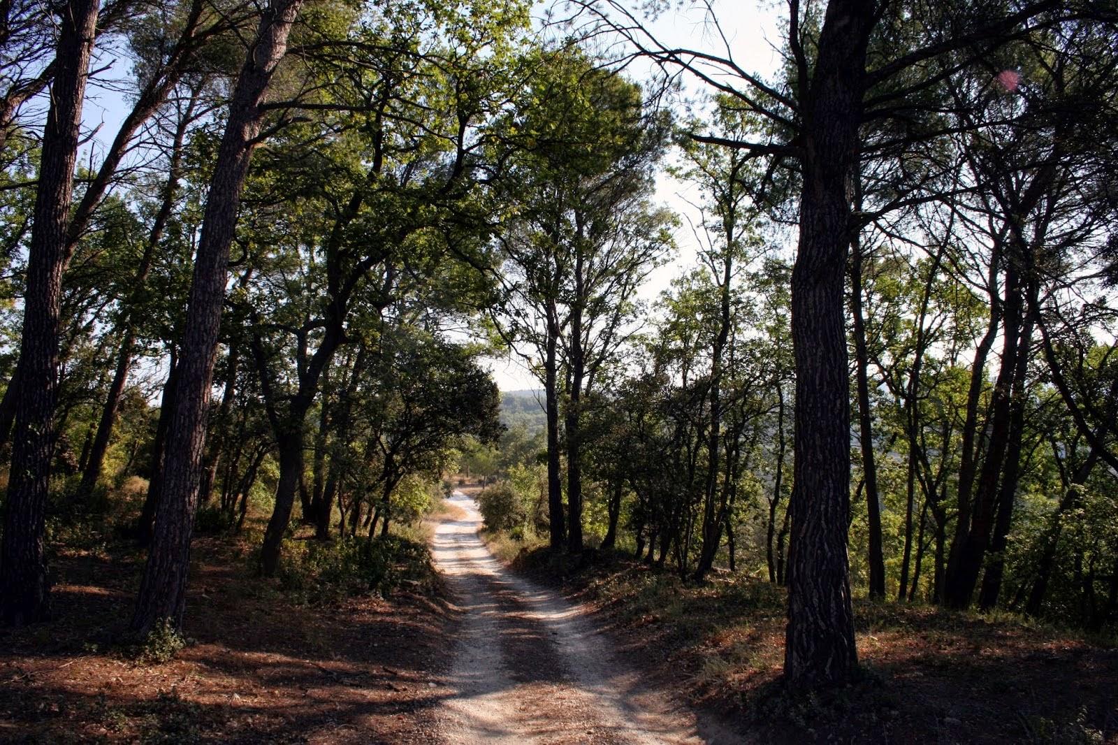 Entrée à travers les pins